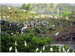 Birds at Vedanthangal Bird santuary