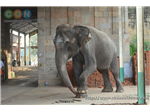 Temple Elephant ThiruVidai Maruthur Mahalingaswamy temple