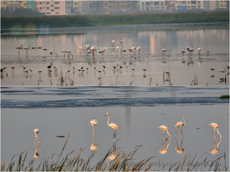 Flamingoes and other birds