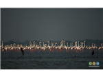 Flamingos in Flamingo Land at Pulicat Backwater or Lake Bird Sanctuary.