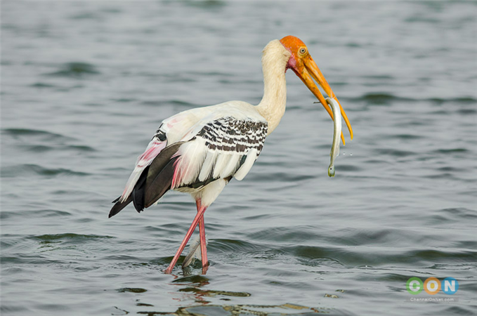 Bird Watching In and Around Chennai